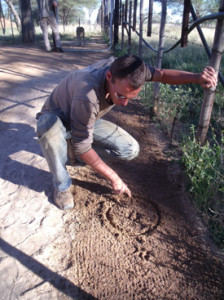 Florian marking good prints to image on a sandy trail in a cheetah rehabilitation enclosure.