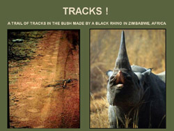 tracks_in_the_bush-9250-188
