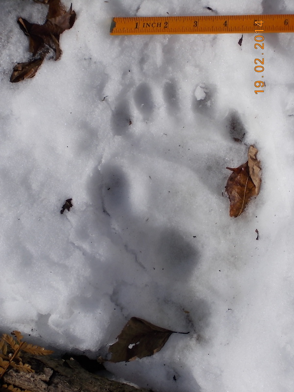 sample panda footprint 1