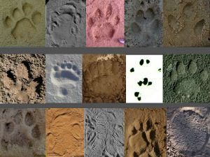 1-1-footprints-from-different-species-003