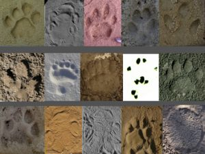 Footprint photos